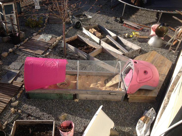 CHicken tractor hønsefres Molde  eglu omlet pink