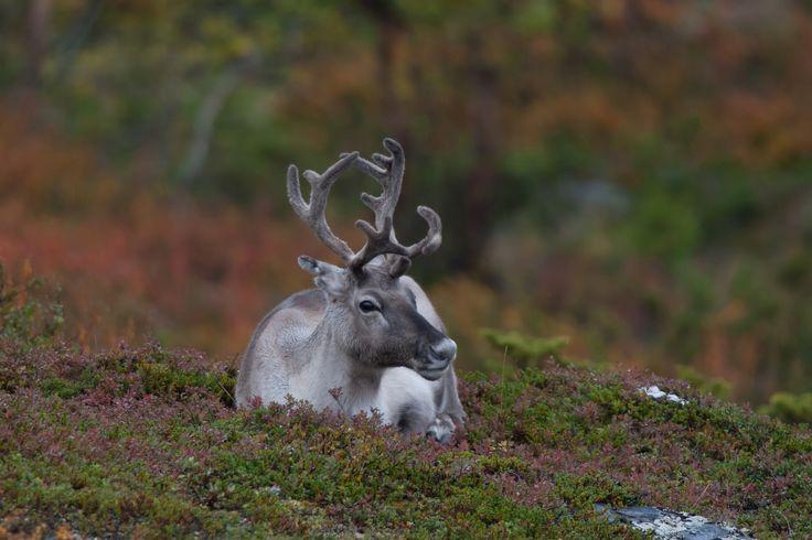 Autumn Colours Hiking on Arctic hills
