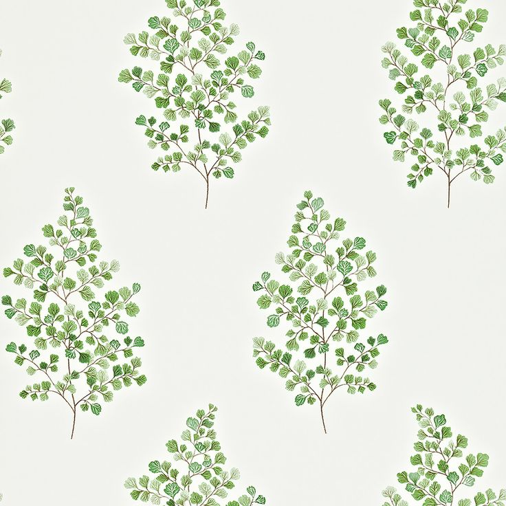 Discover the Sanderson Angel Ferns Wallpaper - 211995 at Amara