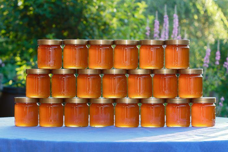 Si une abeille voulait produire 1 kg de miel à elle toute seule il lui faudrait…