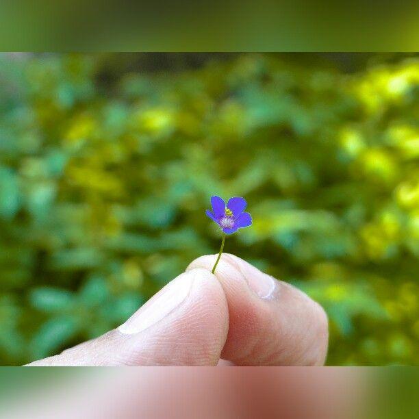 #nature #Mradul_Kankaria