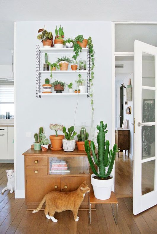 plants on open shelves and table / sfgirlbybay photo by @myattic