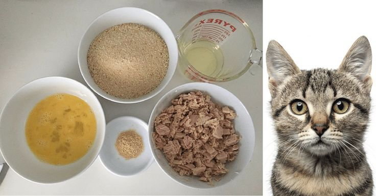 Here are some awesome homemade cat food recipes that can help to save you money. By making your own homemade cat food both your wallet and cat will thank you
