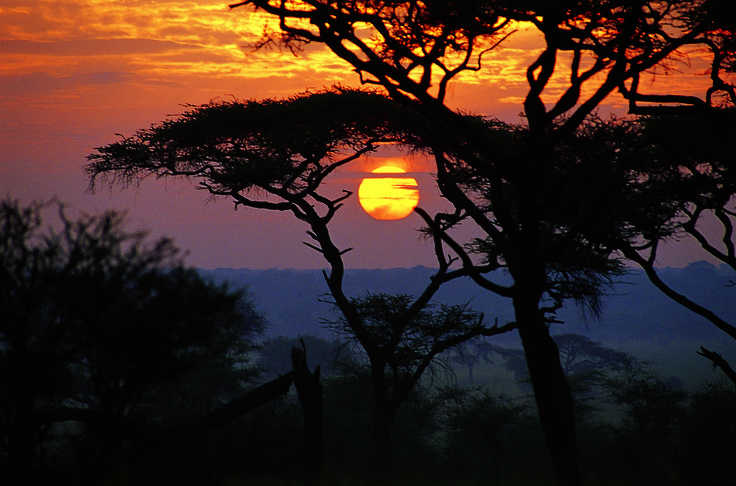 We're celebrating the #Serengeti! Watch more here: https://www.youtube.com/watch?v=OH6tv9y-iaE&t=8s&utm_content=bufferbf128&utm_medium=social&utm_source=pinterest.com&utm_campaign=buffer Safari News Serengeti Gems Serengeti Watch FourSeasonsSerengeti