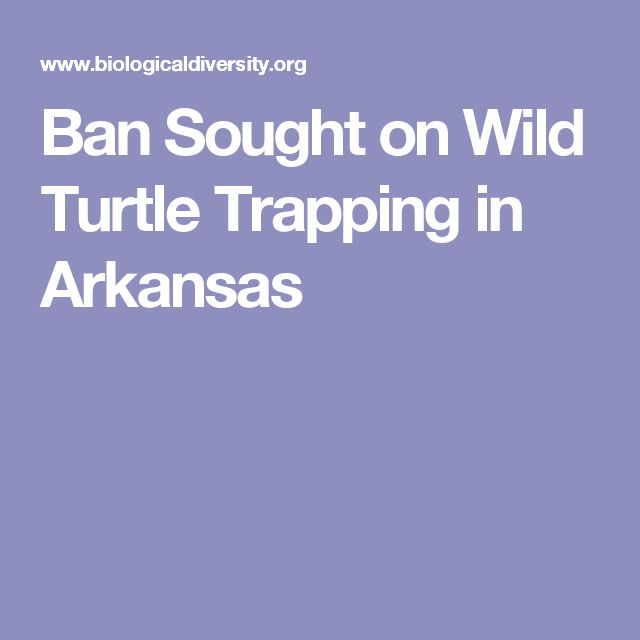 Ban Sought on Wild Turtle Trapping in Arkansas
