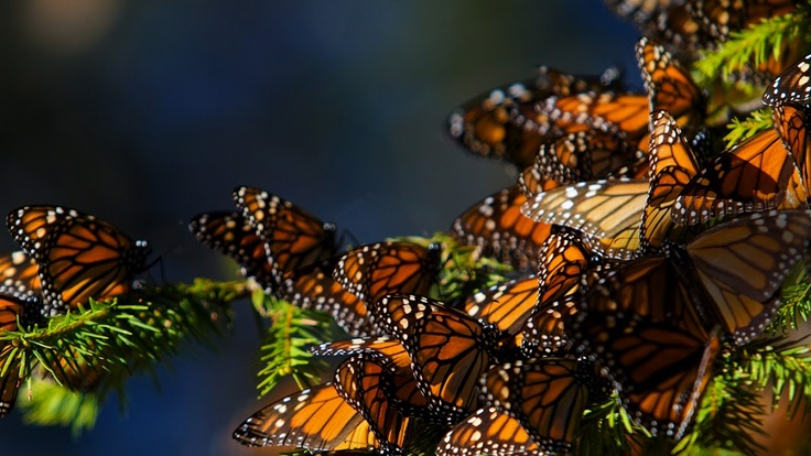 Awesome wild butterflies