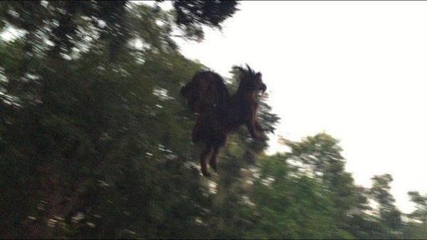 This picture was taken in New Jersey on October 6, 2015... does it show, as some claim, the legendary monster called the Jersey Devil? Or is someone throwing goats from trees?