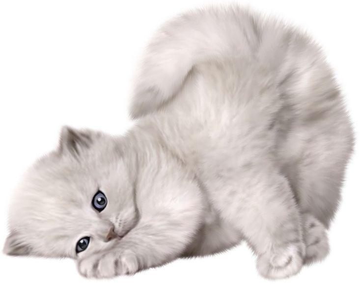 cute cat with big - photo #17
