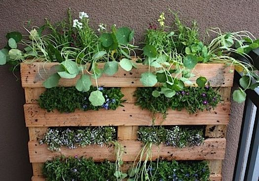 shipping pallet diy vertical garden how-to VIA improvised life