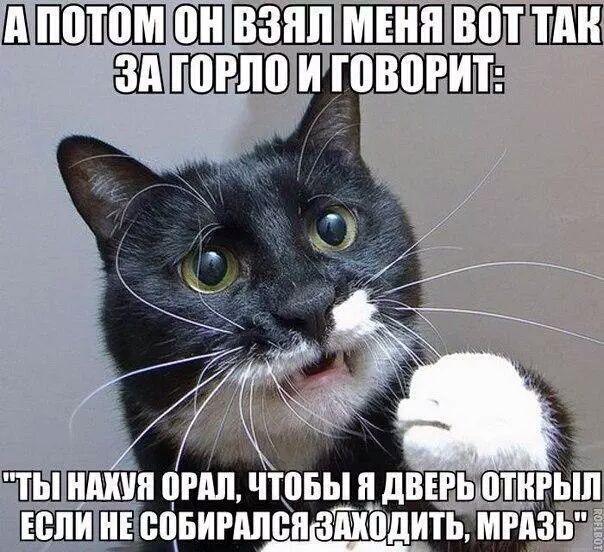 Вся суть котов...