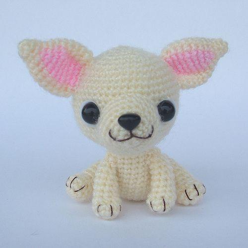 Chihuahua | Flickr - Photo Sharing!