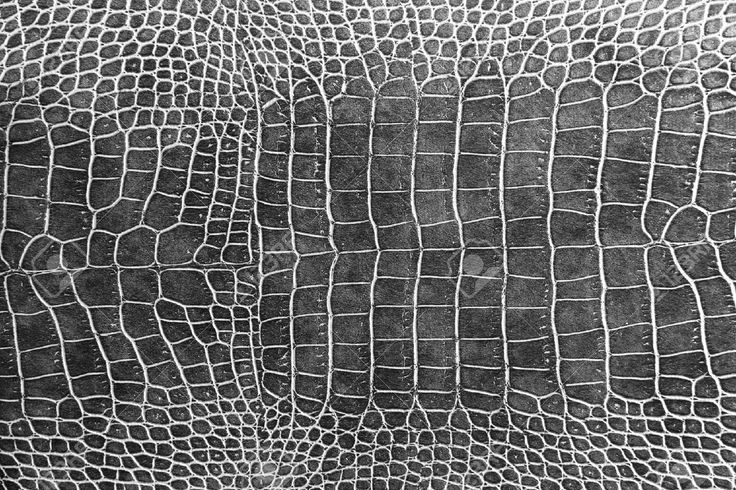 http://www.123rf.com/photo_12989920_black-crocodile-skin-texture-as-a-wallpaper.html