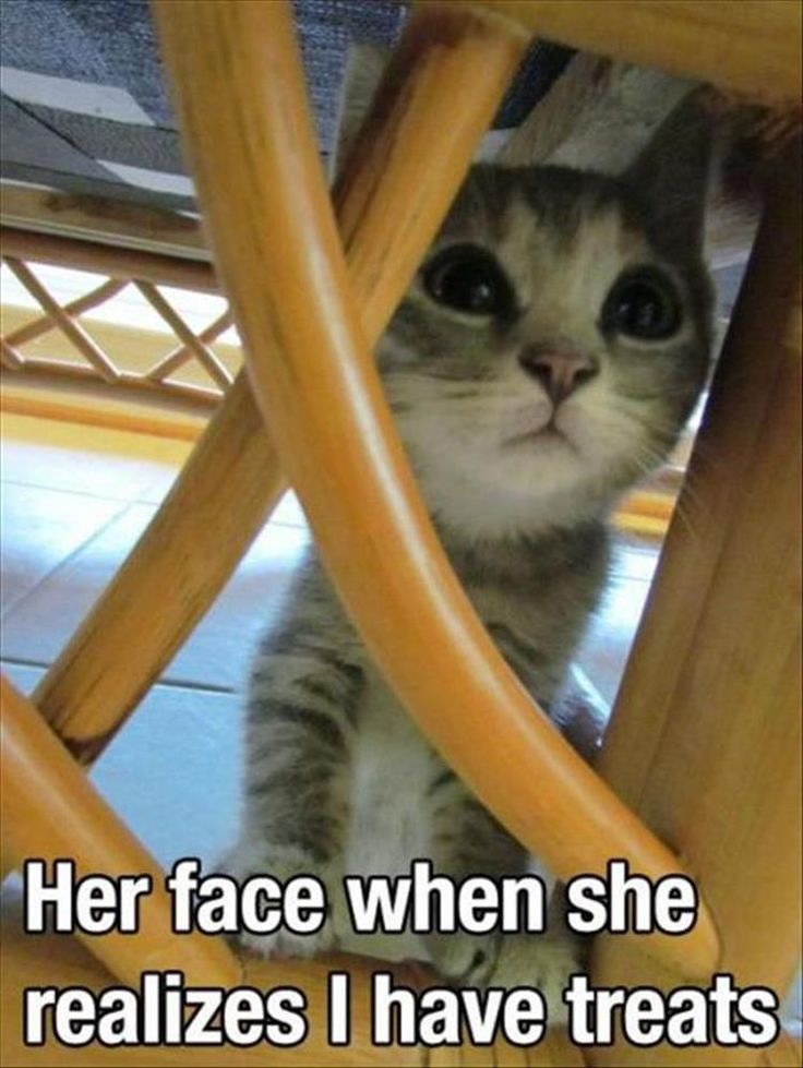 Funny Animal Pictures Of The Day – 27 Pics