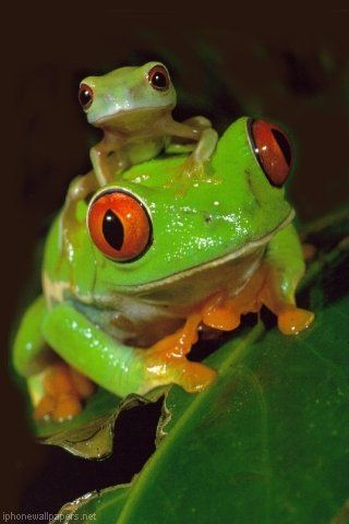 I dont really like frogs...bit these froggies are so cute!