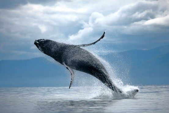 orca whales greek god of the Whale mythology from around the world china yu-kiang the ancient chinese believed that a strange mythological figure, yu-kiang, held sway over the sea.