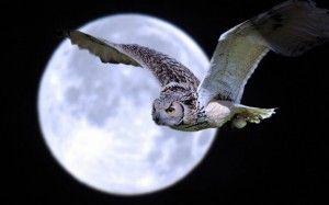 buho volando en la luna