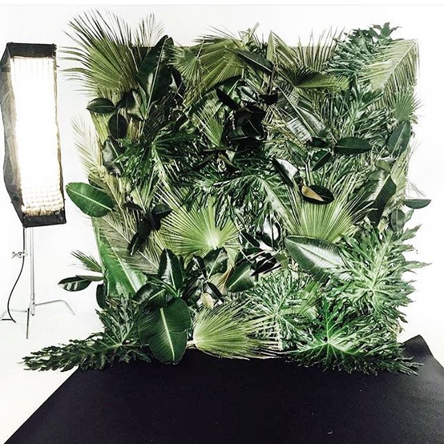 WEDDING INSPO : jungle photo booth  backdrop !  #solsticebride