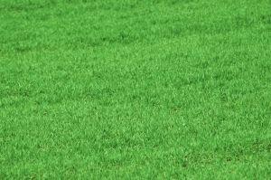 Green your lawn!: Backyard Ideas, Backyard Fun, Beautiful Backyards, Backyard Garden Ideas, Greener Lawn, Garden Patio Yard, Garden Backyard
