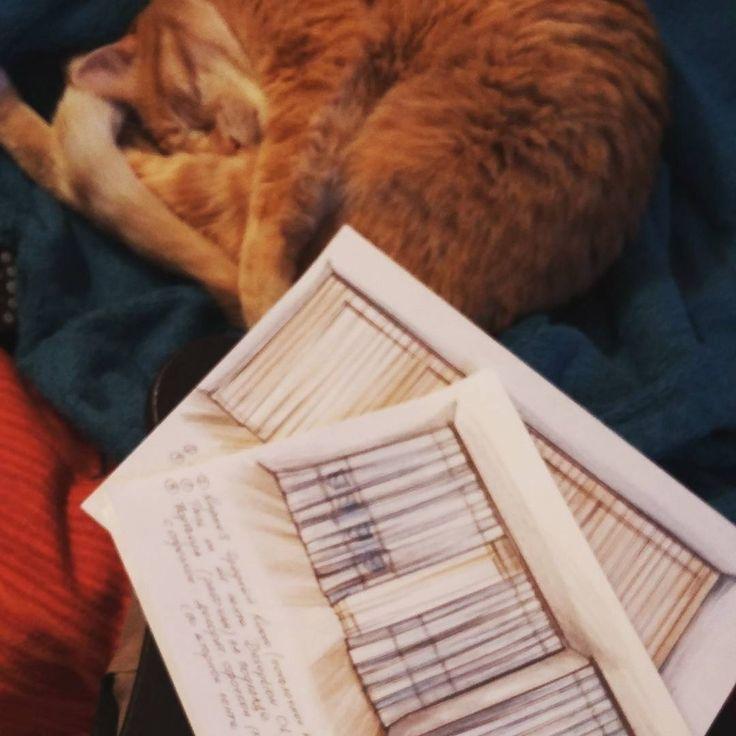 Много работать вредно! Самый лучший помощник дизайнера @irigr.t намекает, что пора отдыхать #котики #шторы #дизайнинтерьера #galleria_arben