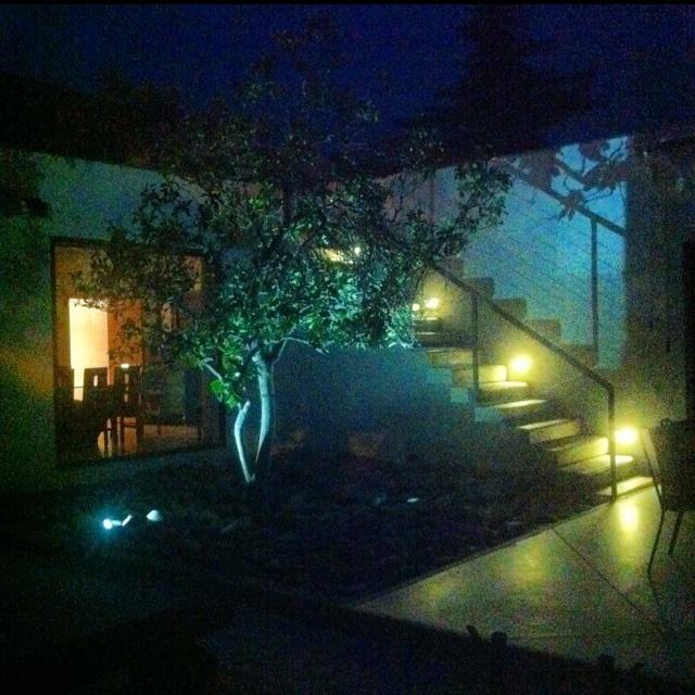 Magnolio night