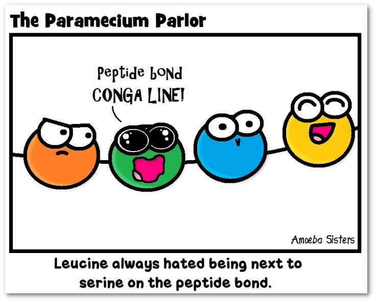 Peptide Bond- amino acid conga line!