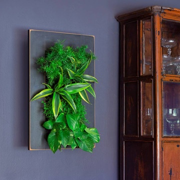 Bring your walls to life with the GroVert Living Wall Planter from BrightGreen. This set includes the GroVert 10-cell planter, a wood frame, and the GroVert Irrigator. Simply mount the included bracket on a secure vertical surface, fill it with a handsome arrangement of plants, and hang—it's that easy! And with the GroVert irrigator, water enters through the top watering chamber and spreads evenly across the moisture mat, making it a cinch to care for your very own piece of living wall art.
