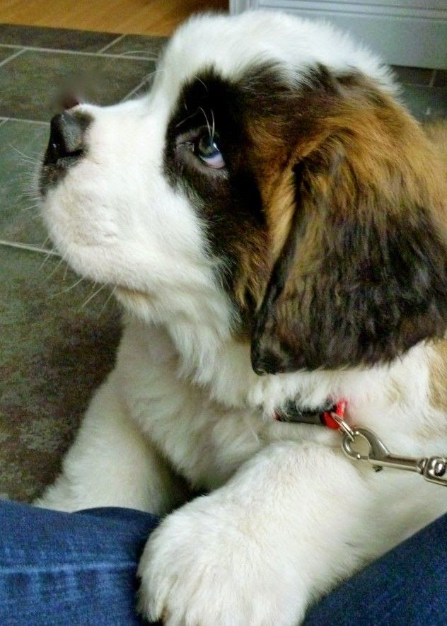 Top 5 Most Beautiful Dog Breeds