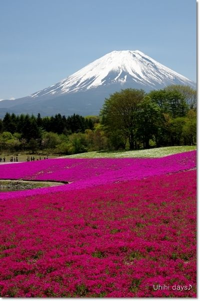 Flowering valley below Mt. Fuji, Japan