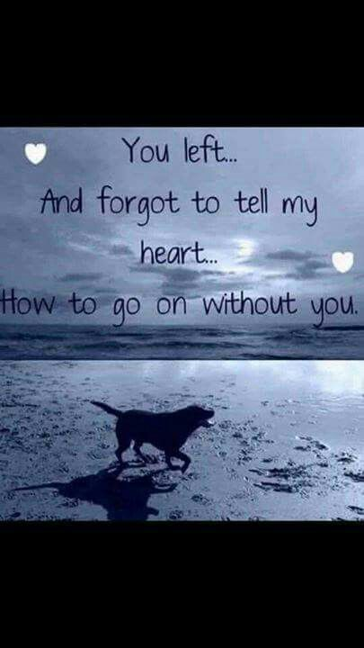 Losing a pet is unbearable.