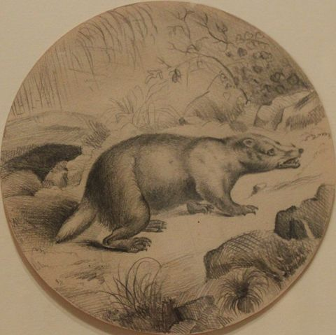 Badger, 1867, Carl von Marr (Age 9), Museum of Wisconsin Art, 0312.