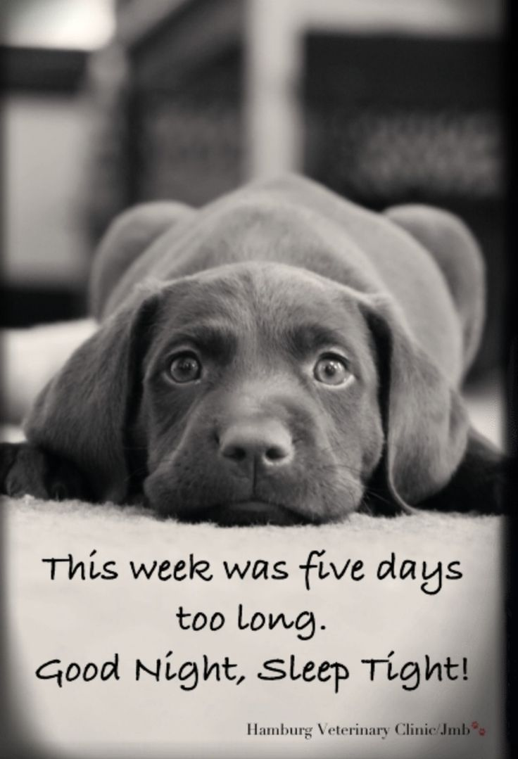 Finally Friday Tgif End Of Week Long Week Tired
