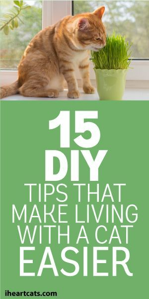 15 DIY Tips That Make Living With A Cat Easier. Life hacks for pet parents with cats!