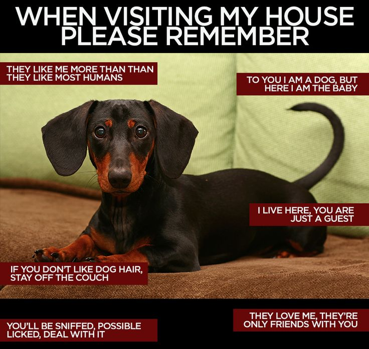 Facebook Sausage Dog Central Cute dog pictures