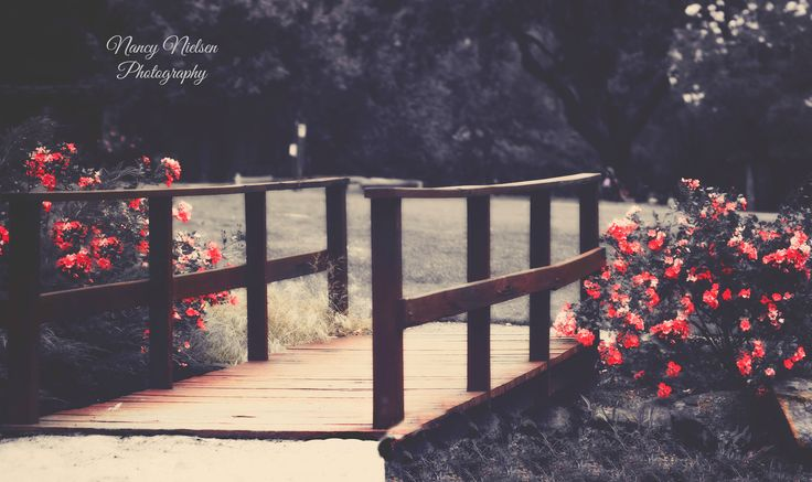 One of the many beautiful sights around Araluen Botanic Park.  All images are Copyright © Nancy Nielsen Photography. No material may be copied, uploaded, edited, published, reproduced or transmitted in any way without my written permission.