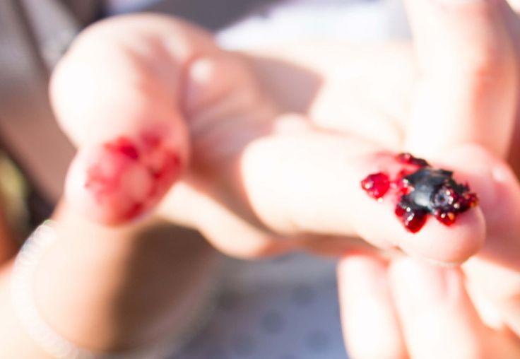 wild blueberries succulent full of nutrients Claudia's Secrets