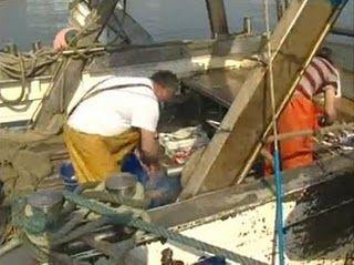 Fermo pesca fino al 26 settembre