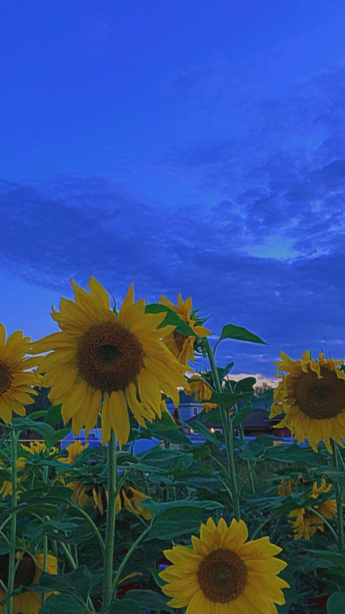 sunflower vol.6 | Hippie wallpaper, Sunflower wallpaper ...