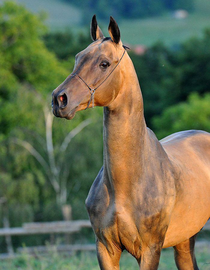 картинки про лошадей редких пород японии флаг