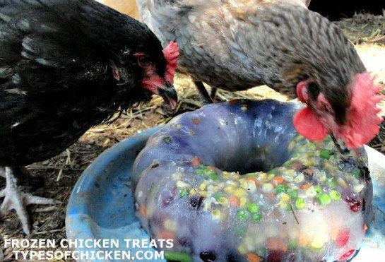 frozen chicken treat