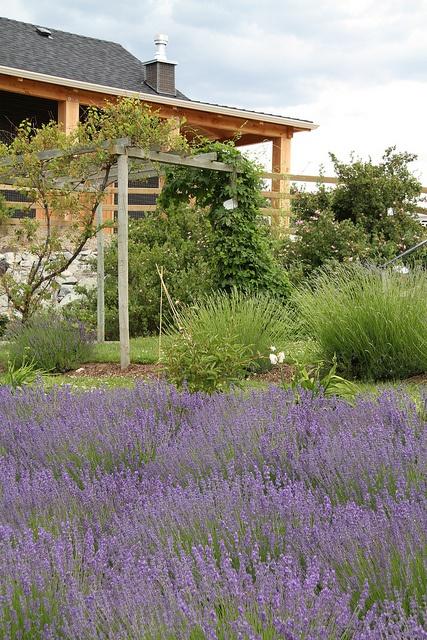 Okanagan Lavender Farm, Kelowna