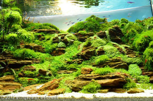 ... aquascaping aquascaping contest aquascape fish stuff entry 170 forward