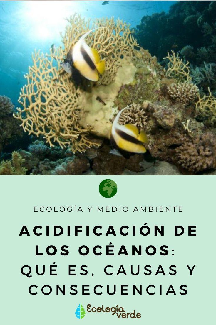 Acidificación De Los Océanos Qué Es Causas Y Consecuencias En 2020 Acidificación Del Océano Medio Ambiente Oceano