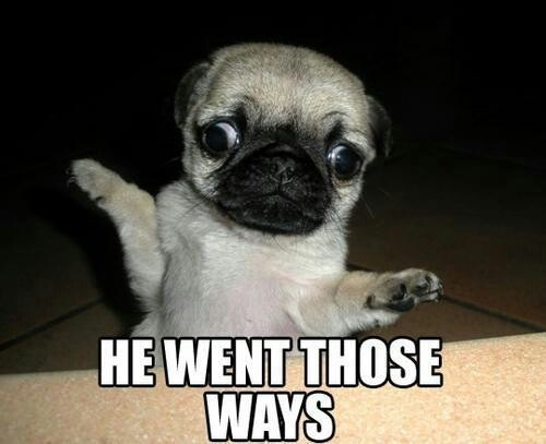 Cross Eyed Funny Looking Funny Memes About: Cross Eyed Pug!!!