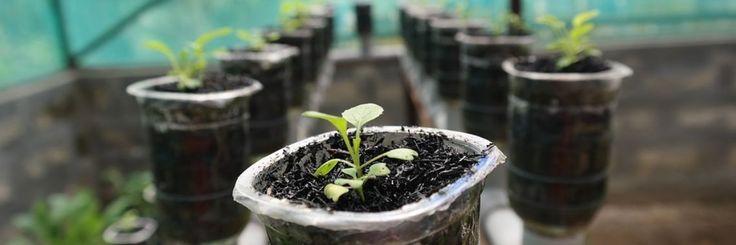 Binnen tuinieren makkelijker met hydrocultuur