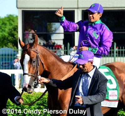 2014 Kentucky Derby winner California Chrome parades on the turf course on his way to the winner's circle at Churchill Downs