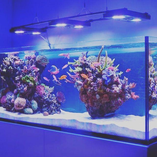 Island Style Aquascape Aquascape Reef Tank Saltwater Aquarium Fish