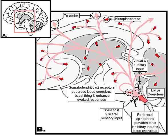 attention deficit disorder abnormal psychology kristin romanital dr meg abnormal psychology march 2, 2014 how does attention deficit disorder/attention deficit hyperactive disorder affect people.