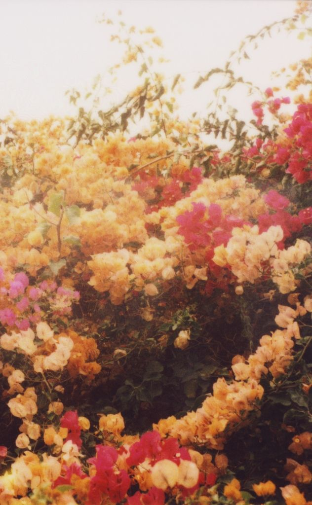 Beauty blooms in many colors<3