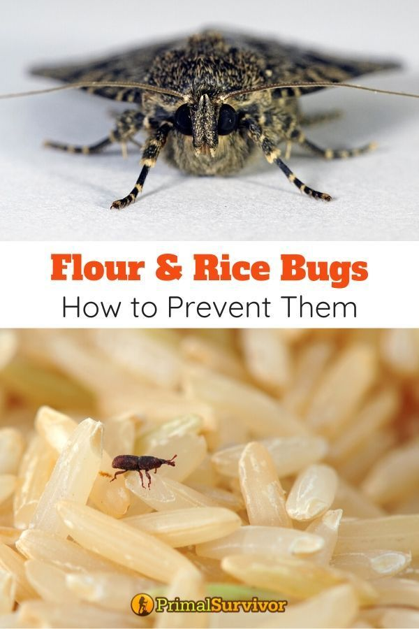 Flour And Rice Bugs How To Prevent Get Rid Of Pests In Your Food Stockpile In 2020 Dry Food Storage Food Food Storage