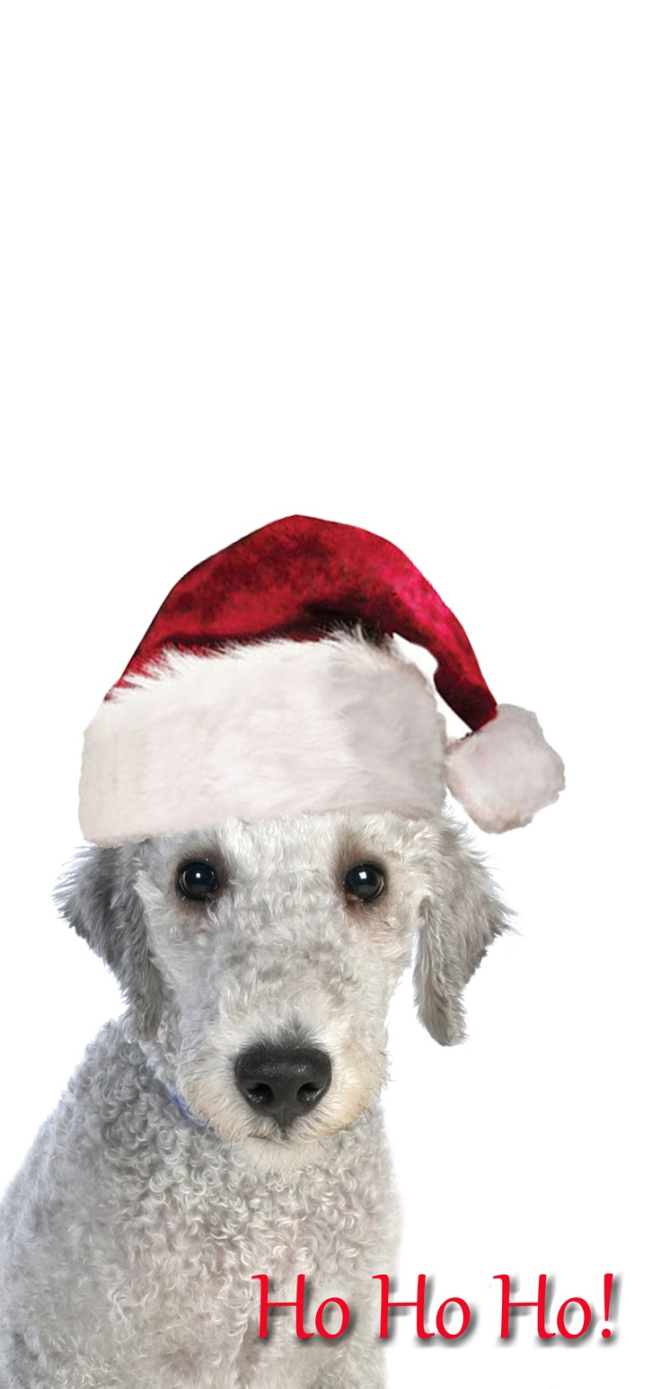 Christmas Bedlington Terrier Puppy Dog #Holiday #Dogs
